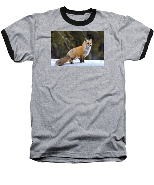 Baseball T-Shirt featuring the photograph Totally Foxy by Yeates Photography
