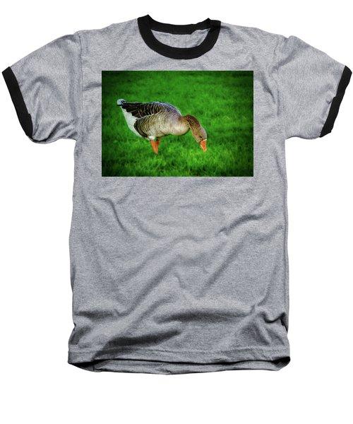 Toulouse Goose  Baseball T-Shirt