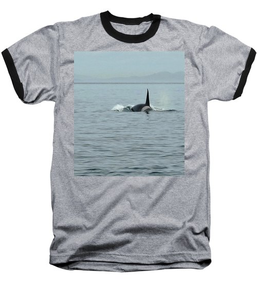 Transient Killer Whale Baseball T-Shirt by Brian Chase
