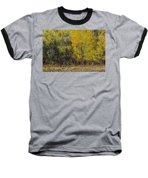 Trees In Fall With Texture Baseball T-Shirt by John Brink