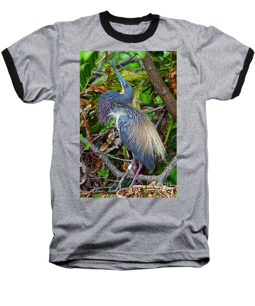 Tricolor Breeding Display Baseball T-Shirt by Larry Nieland