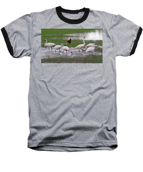 Trumpeter Swans And Rooster Baseball T-Shirt by Karen Molenaar Terrell