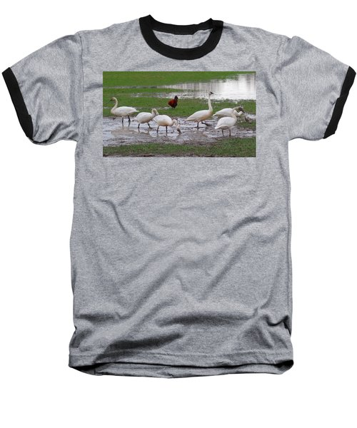 Trumpeter Swans And Rooster Baseball T-Shirt