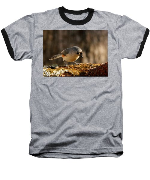 Tufted Titmouse In Fall Baseball T-Shirt by Sheila Brown
