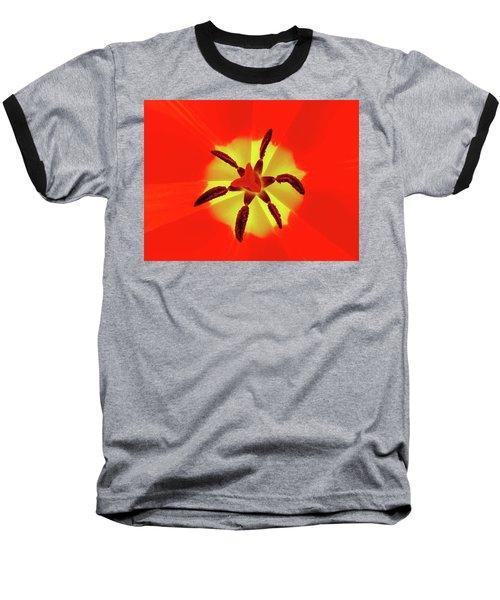 Tulip Baseball T-Shirt by Bernhart Hochleitner