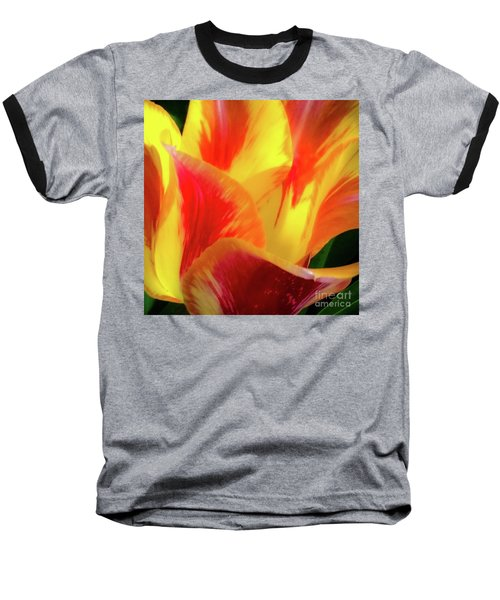 Tulip In Bloom Baseball T-Shirt