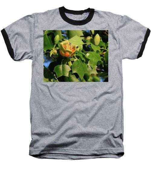 Tulip Poplar Baseball T-Shirt