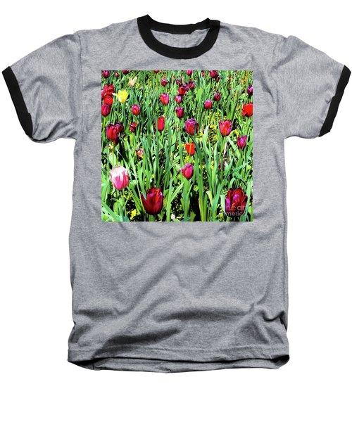 Tulips Blooming Baseball T-Shirt