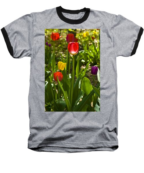 Tulips In The Garden Baseball T-Shirt