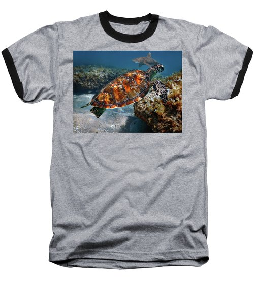 Turtle And Shark Swimming At Ocean Reef Park On Singer Island Florida Baseball T-Shirt by Justin Kelefas