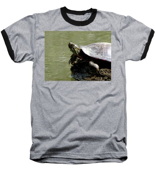 Turtle Bask Baseball T-Shirt