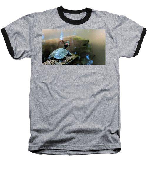 Turtle On Rock Baseball T-Shirt by Mark Barclay