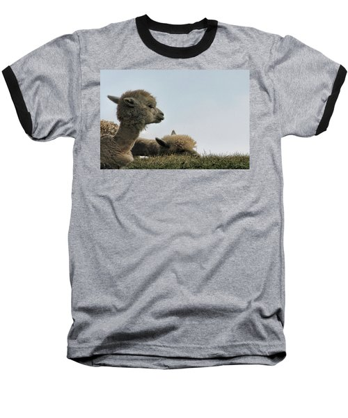 Two Alpaca Baseball T-Shirt by Pat Cook