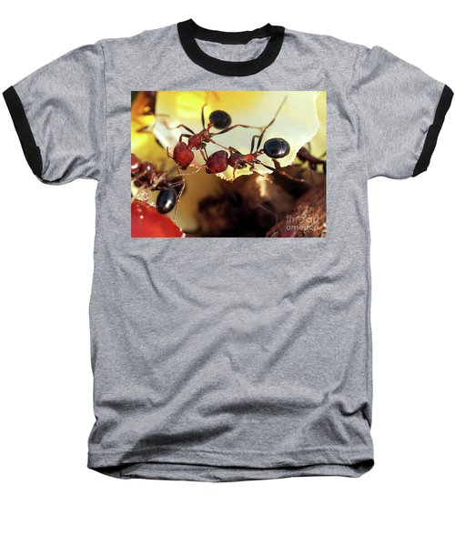 Two Ants In Sunny Day Baseball T-Shirt