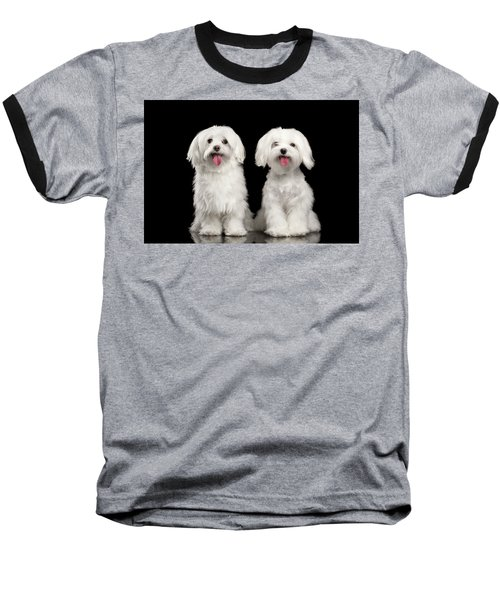 Two Happy White Maltese Dogs Sitting, Looking In Camera Isolated Baseball T-Shirt