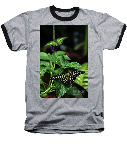 Two Tailed Jay Butterflies- Graphium Agamemnon Baseball T-Shirt