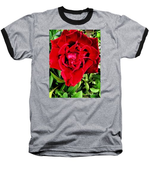 Velvet Red Rose Baseball T-Shirt