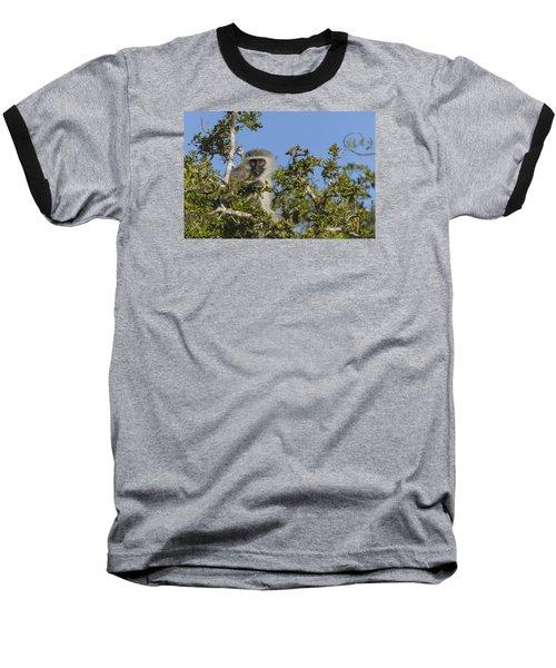 Vervet Monkey Perched In A Treetop Baseball T-Shirt