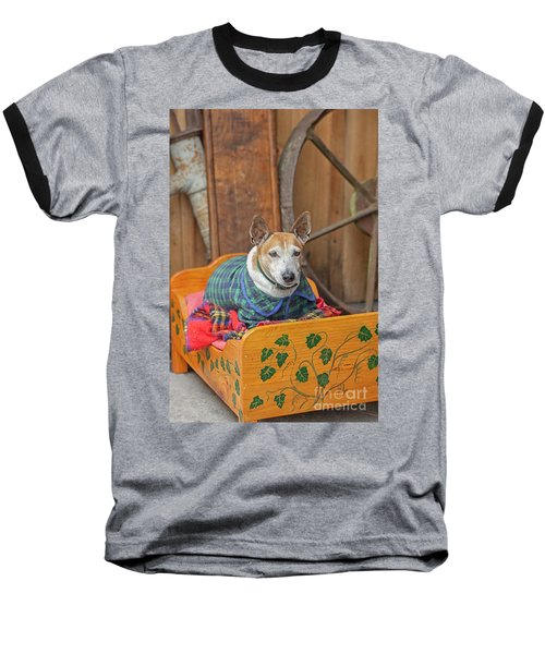 Baseball T-Shirt featuring the photograph Very Old Pet Dog In Clothes On Own Bed by Patricia Hofmeester