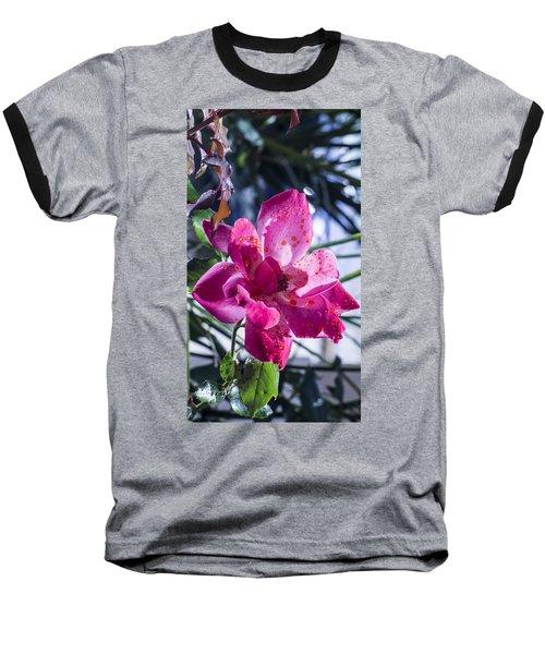 Vibrant Pink Rose Baseball T-Shirt