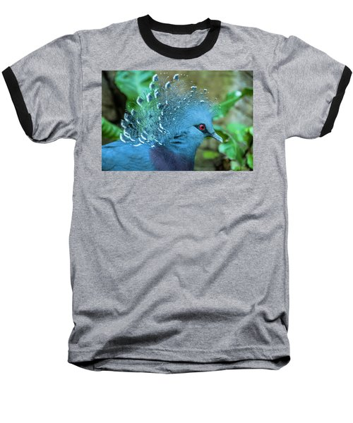 Victoria Crowned Pigeon Baseball T-Shirt by Daniel Hebard