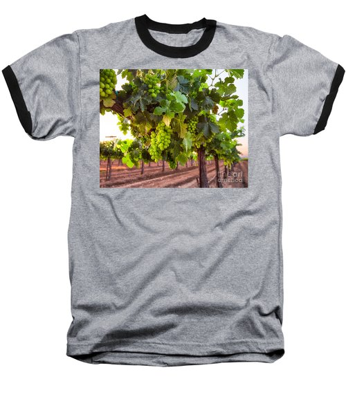 Vineyard 3 Baseball T-Shirt
