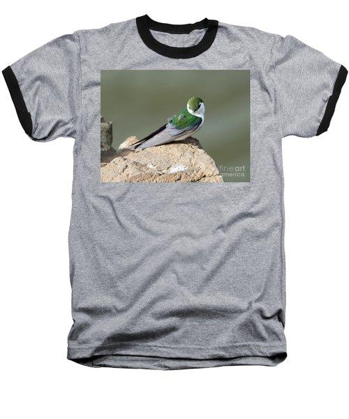 Violet-green Swallow Baseball T-Shirt by Mike Dawson