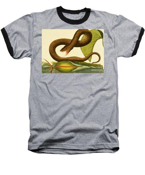 Viper Fusca Baseball T-Shirt by Mark Catesby