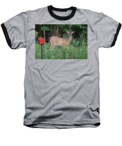 Waiting For Mailman Baseball T-Shirt