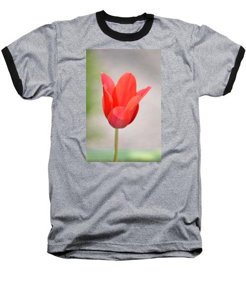 Warm Pink Tulip Baseball T-Shirt by William Bartholomew