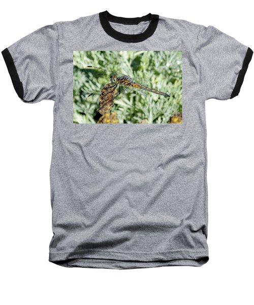 Warming-up - Darner Dragonfly Baseball T-Shirt