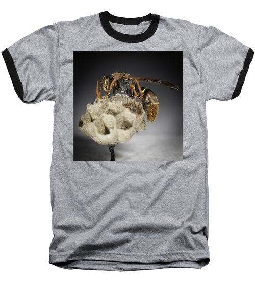 Wasp On A Nest Baseball T-Shirt