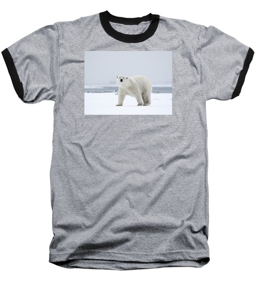 Watchful In The Arctic Baseball T-Shirt