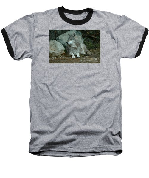 Watchful Wolf Baseball T-Shirt by Sandra Updyke