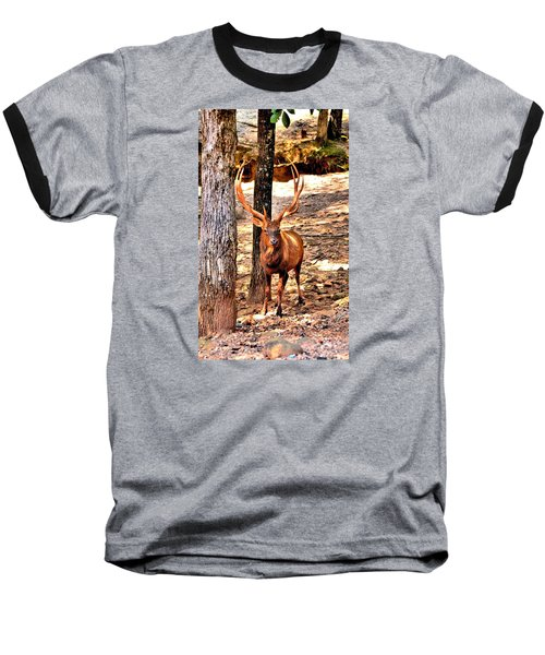 Watchfull Stag Baseball T-Shirt
