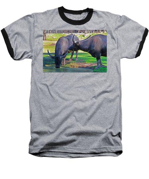 Watching 2 Water Buffalos 1 Water Buffalo Watching Me Baseball T-Shirt