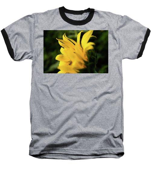Water Drops And Sunflower Petals Baseball T-Shirt