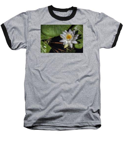 Water Lily Baseball T-Shirt by Steve Gravano