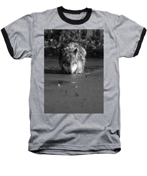 Water Wolf I Baseball T-Shirt by Shari Jardina