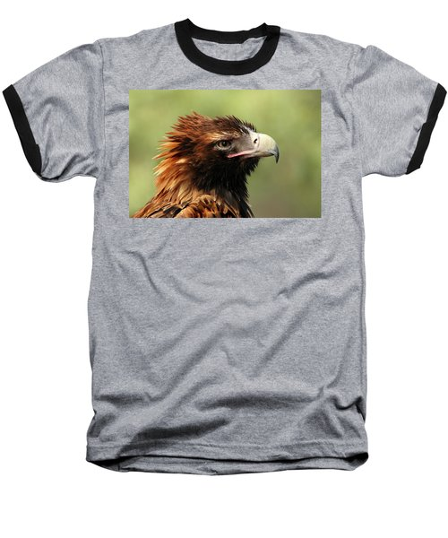 Wedge-tailed Eagle Baseball T-Shirt by Marion Cullen