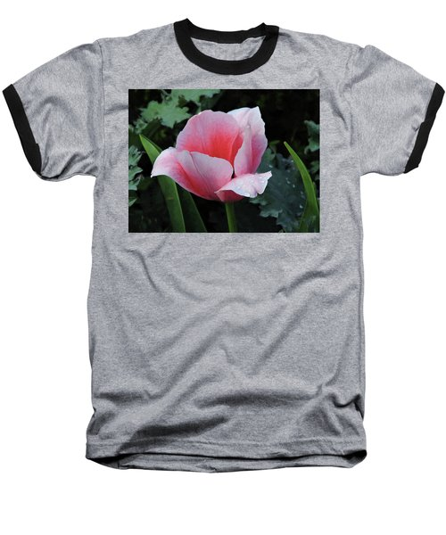 Welcome Tulip Baseball T-Shirt by Penny Lisowski