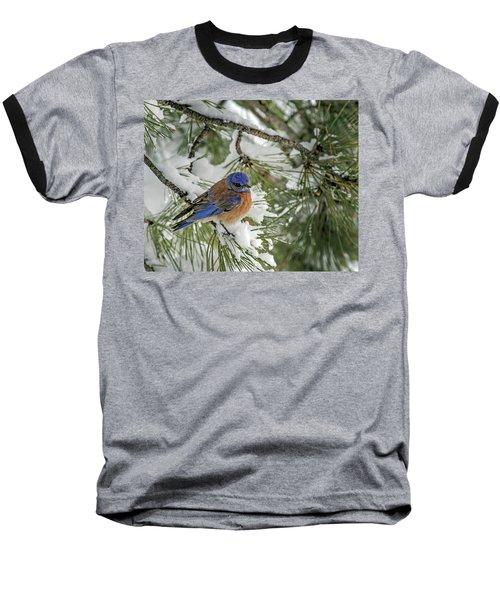 Western Bluebird In A Snowy Pine Baseball T-Shirt