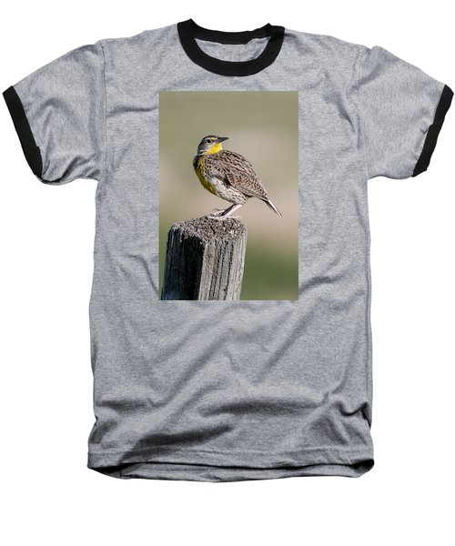 Baseball T-Shirt featuring the photograph Western Meadowlark by Gary Lengyel