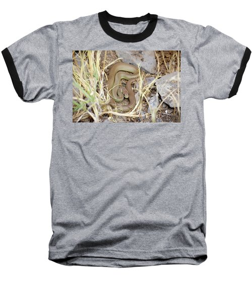 Western Yellow-bellied Racer, Coluber Constrictor Baseball T-Shirt