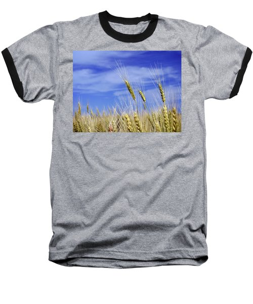 Wheat Trio Baseball T-Shirt by Keith Armstrong