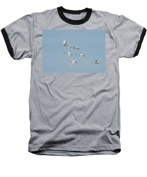 Whistling Swan In Flight Baseball T-Shirt