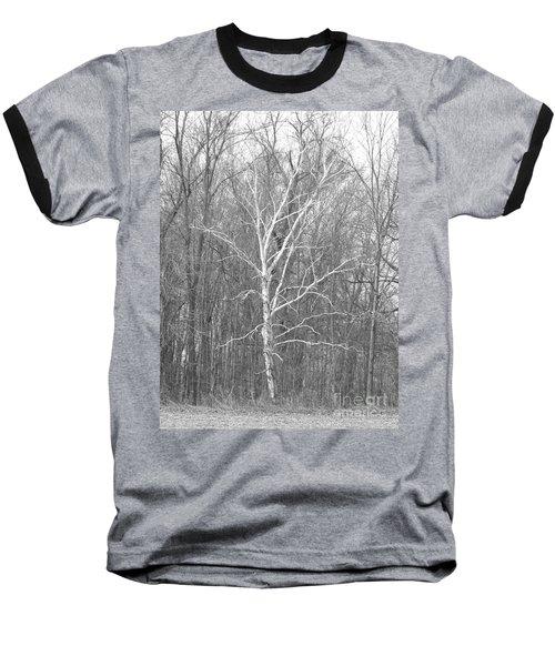 White Birch In Bw Baseball T-Shirt