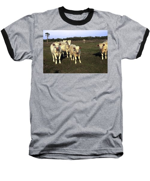 White Cows Baseball T-Shirt by Sally Weigand