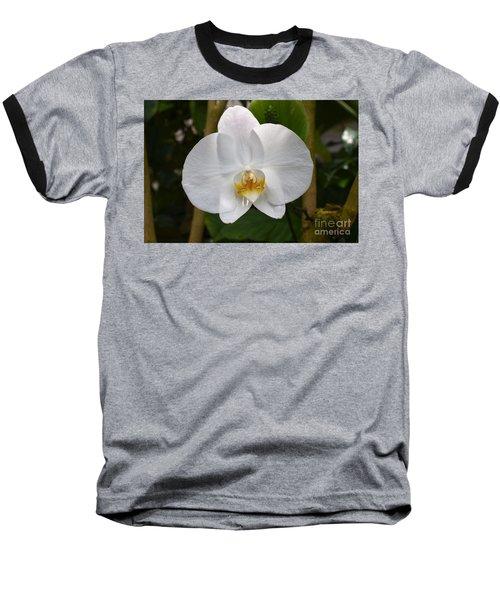 Phalaenopsis Sanderiana Baseball T-Shirt