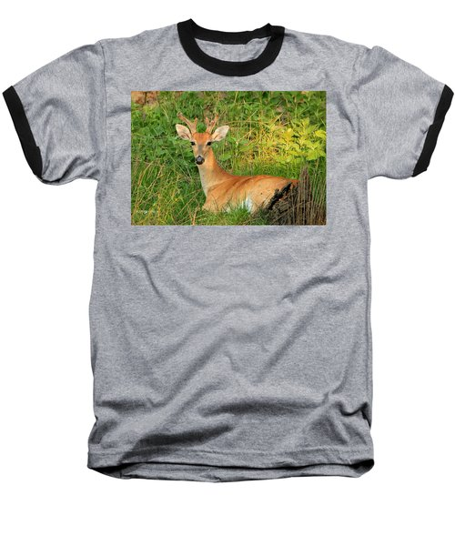 White-tail Buck Resting Baseball T-Shirt